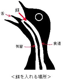 鳥の口.jpg